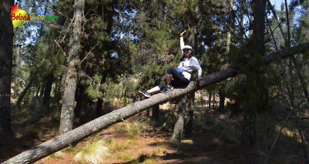 Fotos en el bosque